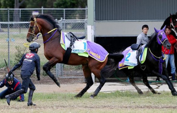 Melbourne Cup Contender Attacked By Stablemate&h=223&w=348&zc=1