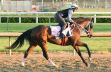 Longshot Paola Queen Wins Test Stakes